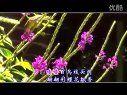 紫鹊界恋歌(MTV歌曲)