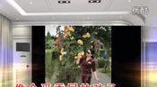 重庆野玫瑰(玫瑰园照片)-iKu 视频直击