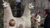 奇幻电影:大叔收到一只双头宠物不知如何是好最后送进了马戏团