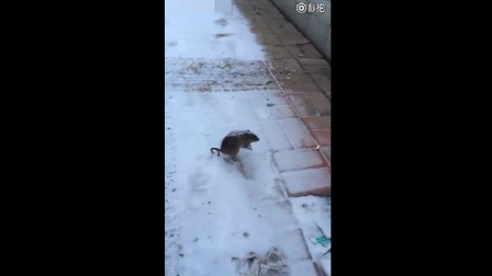 一个视频告诉你东北现在到底有多冷