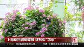 """上海动物园蝴蝶展 绽放似""""花朵"""""""