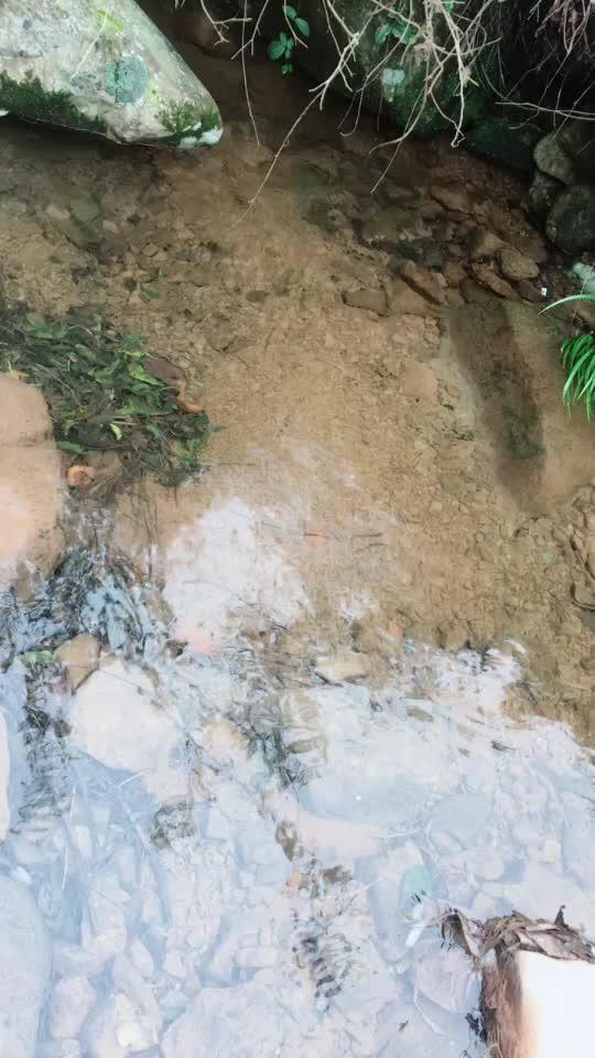 大山上的小溪清澈见底