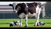 人造肉之后人造奶也登场了!你接受吗?