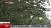 北京:明天降水卷土重来 本市将迎大到暴雨