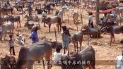 印度又一波神仙操作,聚众喝牛尿能抵抗新冠病毒?网友:什么鬼