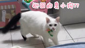 【yuki】玩开心了就哈我什么意思嘛???