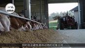 """人造肉后""""人造奶""""也登场了!它是用什么做的,喝了真的安全吗?"""