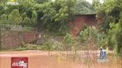 株洲市石峰区响塘村 一处鱼塘出现垮塌