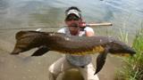 这种鱼适应了环境巨变,没水也能生活四年,却败给了人类