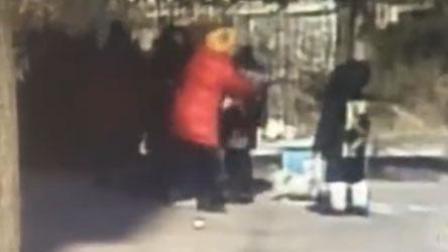 宠物狗打架 俩女主人当街互殴