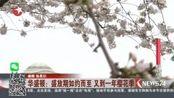 华盛顿:盛放期如约而至 又到一年樱花季