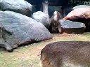 2011年1月3至4 日长龙动物园三乡泉眼温泉之旅