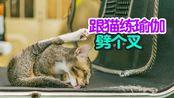 猫咪这个大劈叉很标准,网友表示:练瑜伽跟猫学!