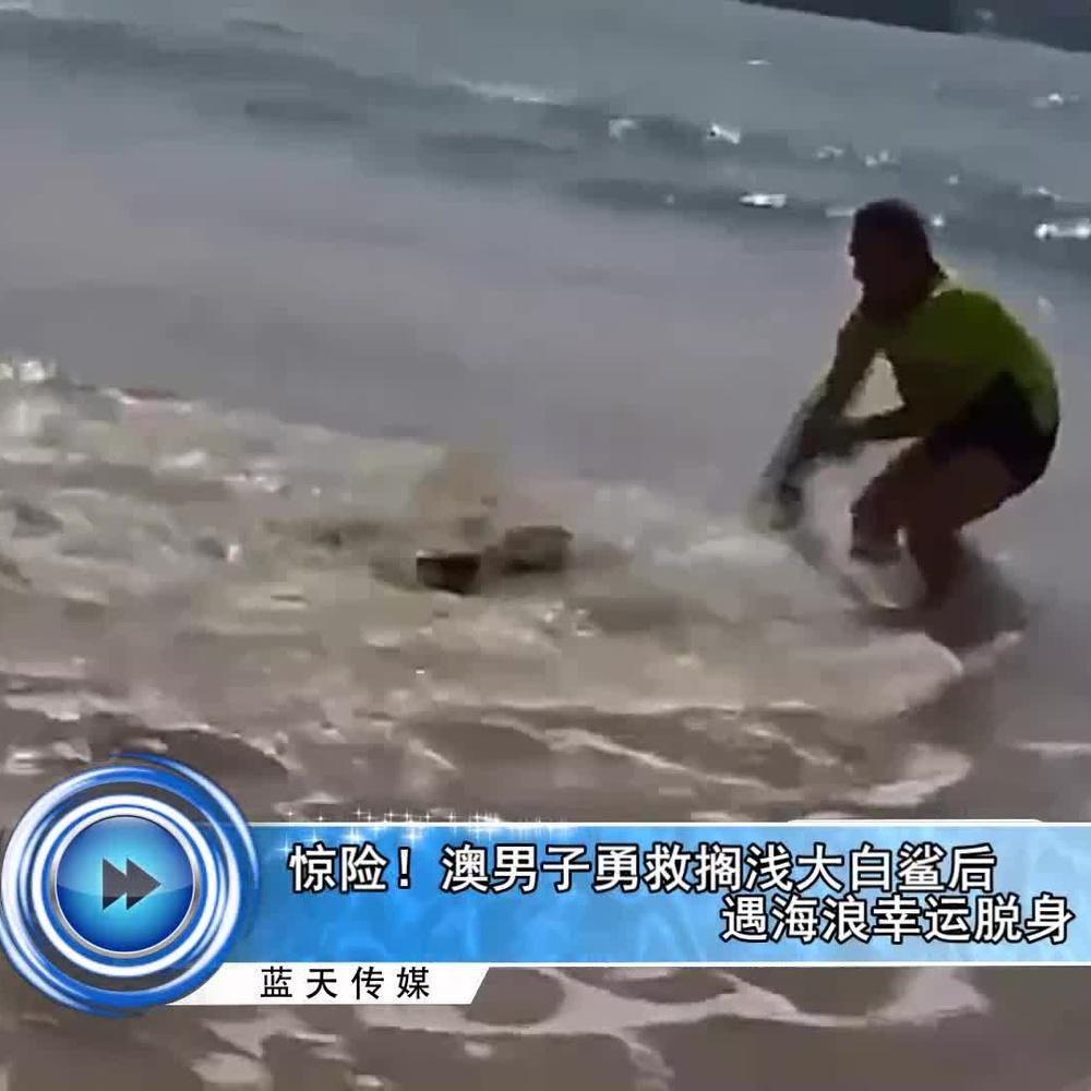 惊险!澳男子勇救搁浅大白鲨后遇海浪幸运脱身