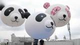 中国旅日大熊猫产崽 日本民众街头拉横幅张灯结彩庆贺