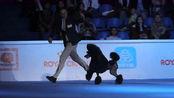 上海世界杯犬展激烈角逐,各组冠军纷纷亮相,贵宾犬成最大赢家