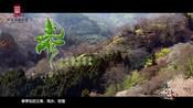 《中医养生四季》