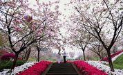 【芳和影视】《爱的花香》