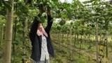 山乡村姑在家创业种100亩瓜蒌,产值预计50万