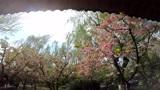 济南趵突泉花开正好,春色正浓,小长假出行好选择