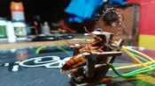 为处死蟑螂,菲律宾雕刻家自制mini电椅-观察者网国际资讯-观察者网视频