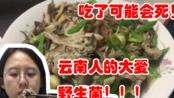 吃了可能会死人!云南人每年都要冒险吃野生菌!较为安全的鸡枞菌!