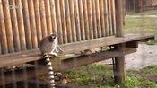 2016年3月27日南昌动物园之猴子1—在线播放—优酷网,视频高清在线观看