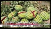 2000个西瓜被刀一夜砍毁,天降横祸损失数万元