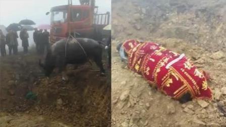 贵州牛王死后万人送 主人厚葬为其立碑