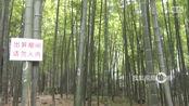 西湖版到此一游情侣在景区观赏竹上连续六年刻字表白