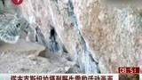 塔吉克斯坦拍摄到野生雪豹活动画面