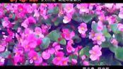 MV新郎:薛文华 新娘:蒋丹