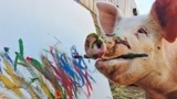 """这猪被誉为猪界""""毕加索"""",一幅画卖10万,从此走向猪生巅峰!"""