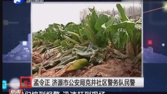 发13秒视频 毁13亩菠菜