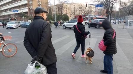 礼让斑马线丨一遛狗者闯红灯后, 众人未跟随