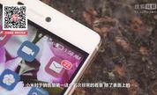 「科技龙卷风」华为OR小米 谁是智能手机出货量之王?