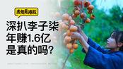 深扒李子柒,年入1.6亿是真的吗?