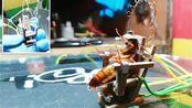 小伙自制电椅处死蟑螂被指责虐待动物,网友:爱蟑螂人士?
