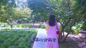 龙梅子新歌一首《蝶恋花·愿为花更美》,花为蝶艳,蝶为花飞!