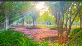 玩家 走进森林生态园公园赏花看景快来围观吧!