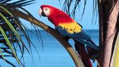 谁说金刚鹦鹉都是色彩缤纷的?白色金刚鹦鹉表示难道我不美吗?