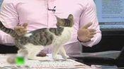 土耳其新闻台直播中 下一秒竟被流浪猫抢镜
