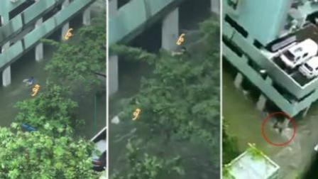 澳门男子暴雨中蝶泳被骂神经 实为救人