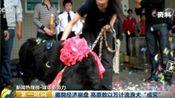 藏獒经济崩盘 曾经售价上千万如今沦为流浪狗
