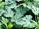 西葫芦种植技术-www.blby888.com 转载