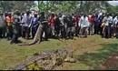 乌干达捕获食人巨鳄 80岁  重达一吨-新蓝网-视频-娱乐-新闻