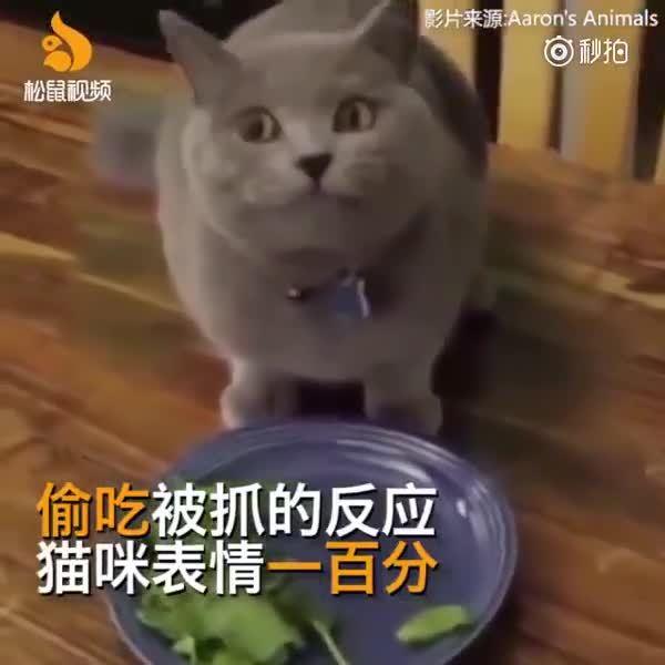 喵星人偷吃被抓的反应,猫咪表情给100分!哈哈