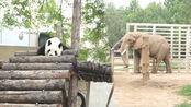 带3岁萌娃去逛北京动物园,竟然看到了倒霉熊,太逗了!