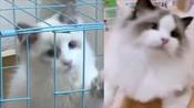 【辽宁】沈阳女子花8000买布偶猫 到货后嫌颜值低报警