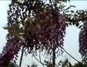 普陀山20060422